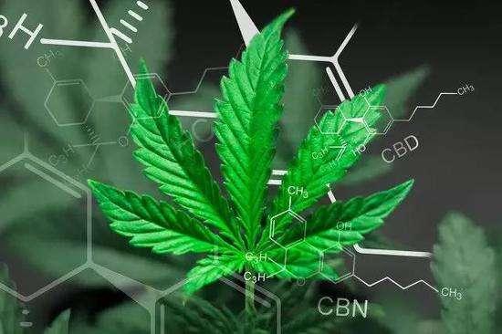 工业大麻.jpg
