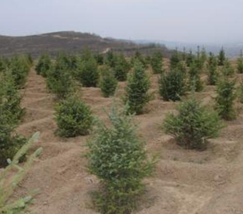 造林绿化工程.png